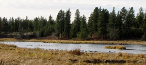 full view of the bird pondc 2012, Juniper Stokes